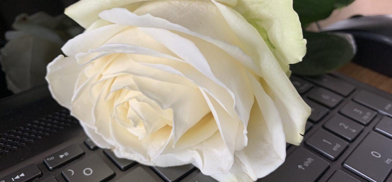 roos op laptop
